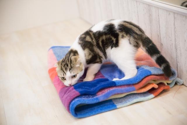 コインランドリーで毛布を洗う